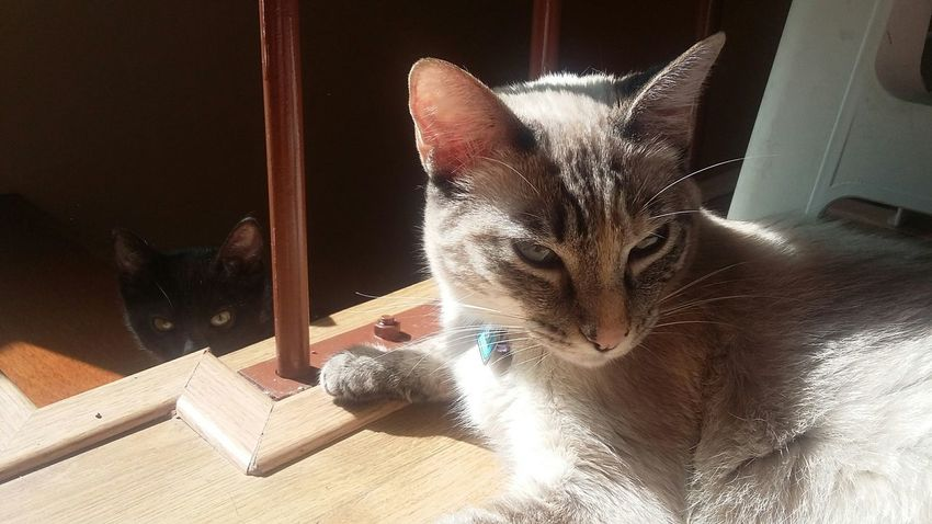 Taking Photos Check This Out No Filter Cats Friends Cute Pets Cat Sunny Enjoying The SunBeautiful