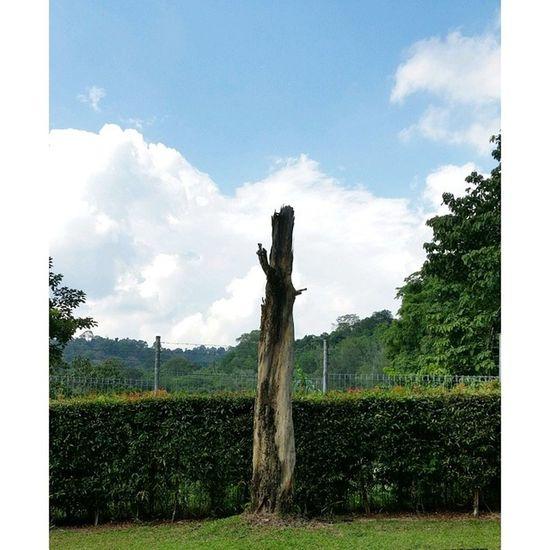 T for Tree #instadaily #treeporn edinamzz superheelz09