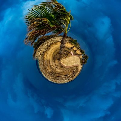 3XSPUnity EyeEm Best Shots Enjoying Life EyeEmNewHere Blue Sky Low Angle View Cloud - Sky No People Nature Plant Day Art And Craft Beauty In Nature Outdoors Tree Hanging Growth Palm Tree Geometric Shape Close-up Tranquility Circle Ornate