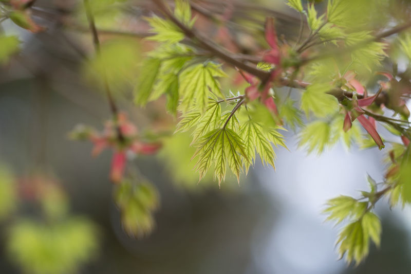 NoEditNoFilter Sigma 180mm F2.8 Beauty In Nature Branch Close-up Coniferous Tree Day Flower Flowering Plant Focus On Foreground Fragility Freshness Green Color Growth Leaf Leaves Nature Needle - Plant Part Outdoors Pine Tree Plant Plant Part Selective Focus Tranquility Tree