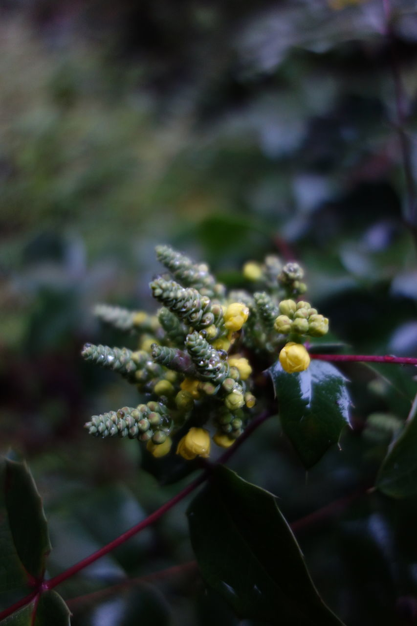 growth, nature, plant, beauty in nature, no people, flower, day, outdoors, green color, tree, branch, fragility, close-up, freshness