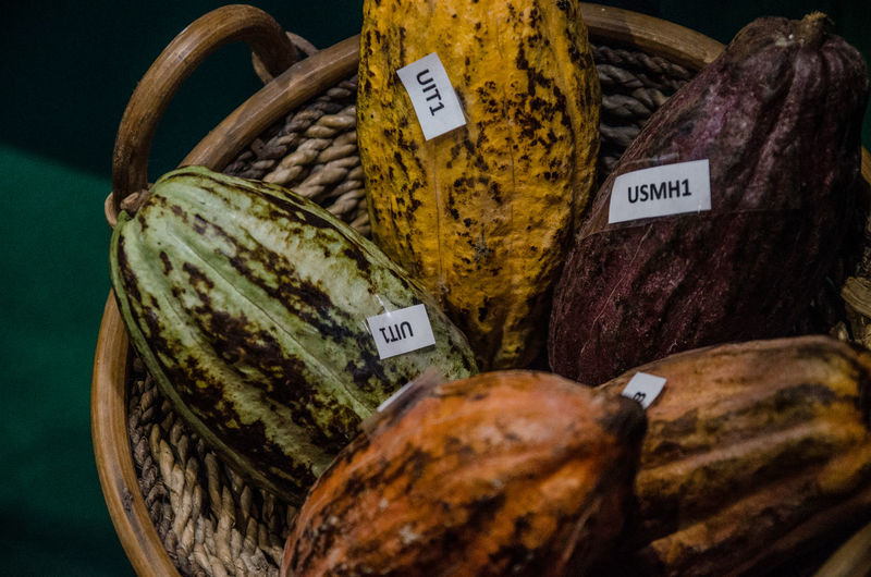 Chocolate Abundance Cacao Choice Close-up Communication Container Food Food And Drink For Sale Freshness Healthy Eating Label Market No People Price Tag Retail  Retail Display Still Life Text Variation Wellbeing Western Script Autumn Mood