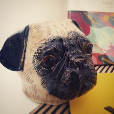 Animal Animal Head  Animal Nose Close-up Dog Focus On Foreground No People Pets Pottery Pug Selective Focus