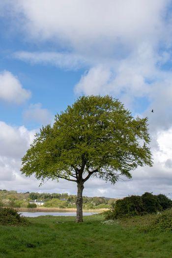 The tree near