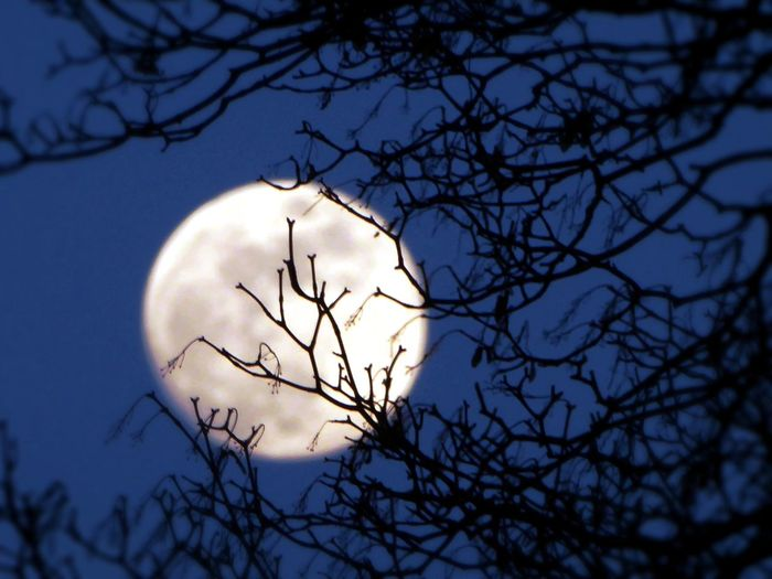 Nighshot The Night Before Fullmoon😍 Clear Sky At Night Silhouette Moon Branch Beauty In Nature Enjoyinglife  moon through branches Silhouette_collection Tranquil Scene For My Friends 😍😘🎁 Zoooom😍 Playing With Mr.Moon Bare Tree Moonphotography Moon_lovers Moonbeauty