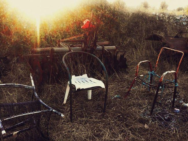 Hidden Gems  Chairs Sunset Forest