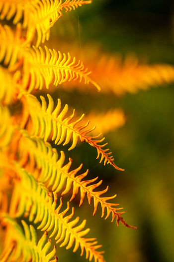 Close-up of fern during autumn