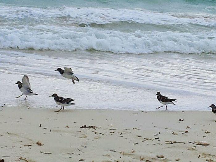 Bird Near Surf Bird And Ocean Bird