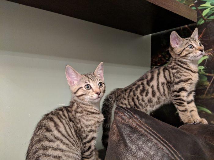 Portrait of two kittens