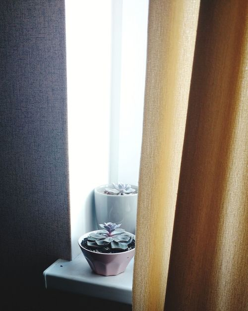 Indoors  Curtain Home Interior Window Domestic Bathroom Domestic Room Perfume Sprayer No People Day Luxury Luxury Hotel Perfume Bathroom Flower Nature Beauty In Nature Freshness Tree Growth Succulents Plants Potted Plant
