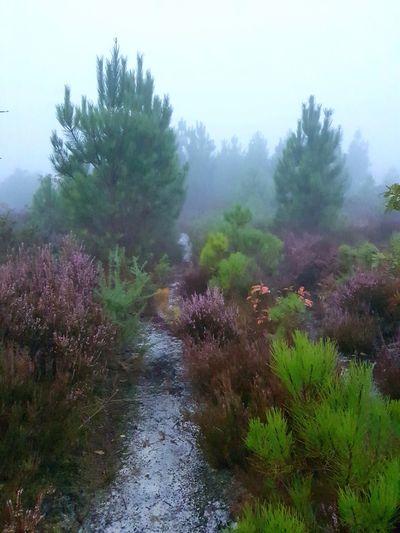Tree Fog Dawn