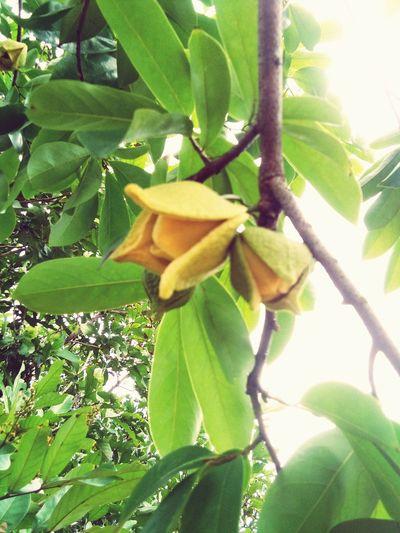 Flower Leaf Banana Tree Tree Close-up Green Color Plant
