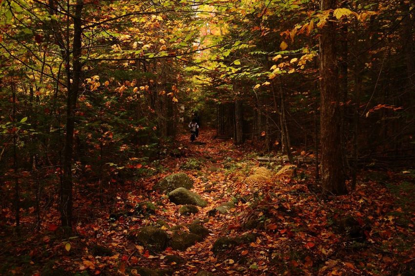 Amazing Foliage scenery Fall Colors Fall Beauty Foliage Plant Photoshooting National Park Vermont_foliage State Park  Trail Running Colorful Nature Photooftheday Canon 70d New England  Autumn colors Nature_collection Nature Photography Photographylovers Photographer Foliage, New England Foliage Vermontphotography Vermont_foliage Vermont_scenery Vermont Groton Forest Autumn Tree Nature One Animal Leaf EyeEmNewHere