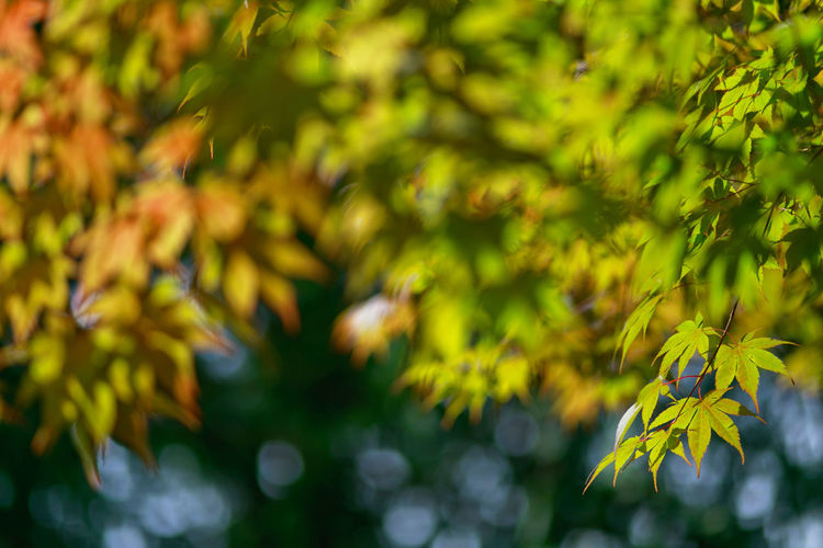 Autumn leaves Tranquility Plant Growth Beauty In Nature Nature Plant Part Focus On Foreground Green Color Leaf No People Close-up Day Tree Yellow Selective Focus Vulnerability  Freshness Fragility Flowering Plant Outdoors Leaves Autumn Leaves