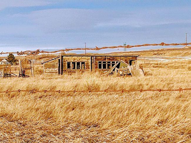 Colorado Winter Wildlife Photography Rural Scene Rural America Rural Colorado Outdoors Day No People Landscape Sky