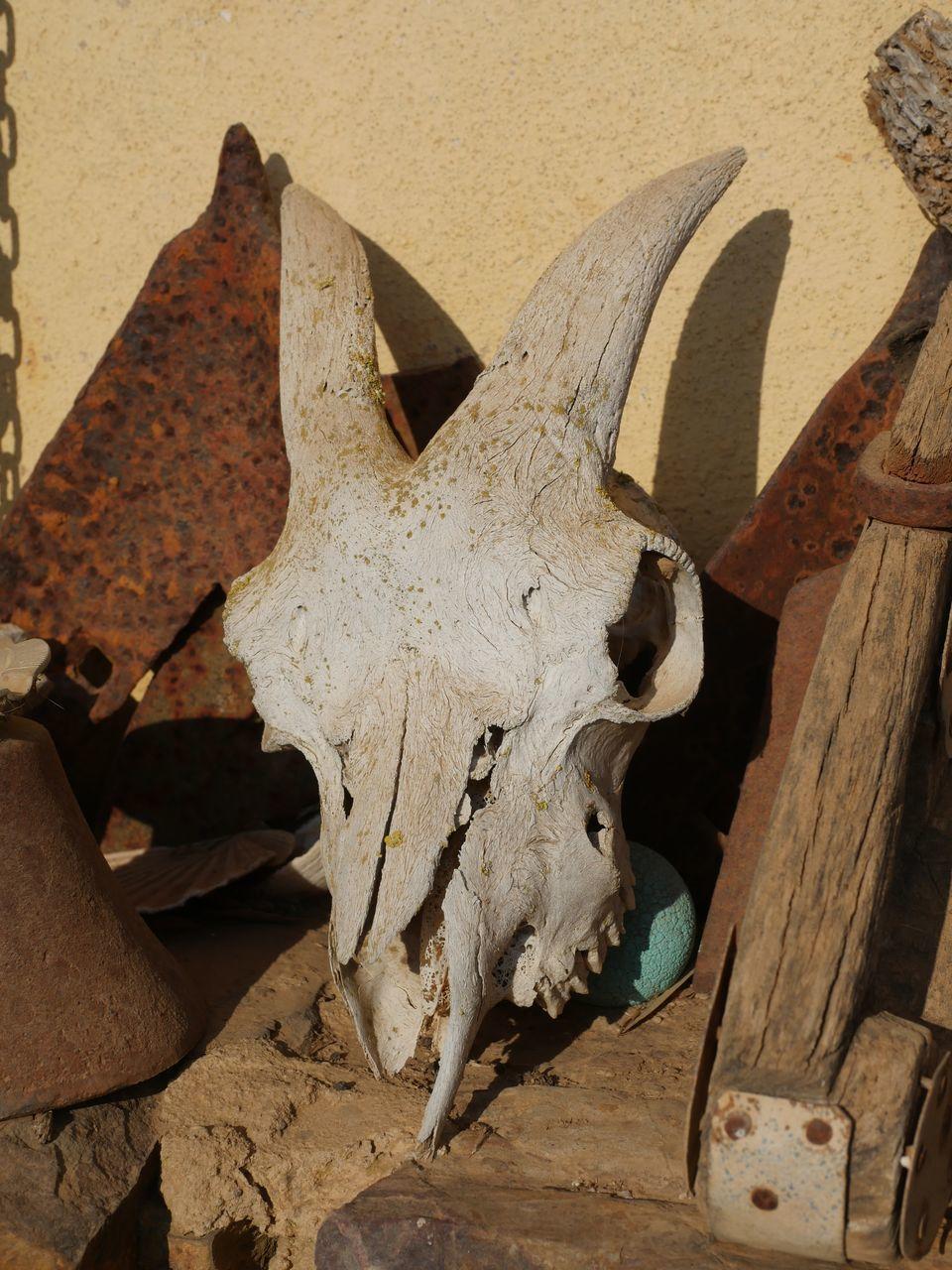 bone, animal body part, animal skull, animal, no people, close-up, animal themes, animal wildlife, nature, animal bone, sunlight, day, wood - material, land, body part, tree, outdoors, still life