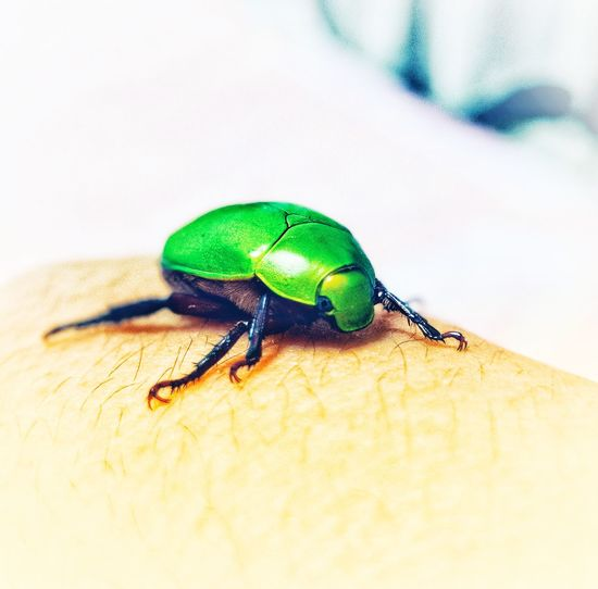 Insect Insect