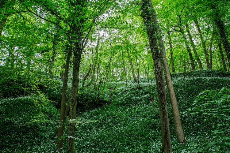 Walk in the forest Skipton Bamboo - Plant Beauty In Nature Day Environment Foliage Forest Forestwalk Green Color Growth Land Lush Foliage Nature No People Non-urban Scene Outdoors Plant Rainforest Scenics - Nature Tranquil Scene Tranquility Tree Tree Trunk Trunk WoodLand