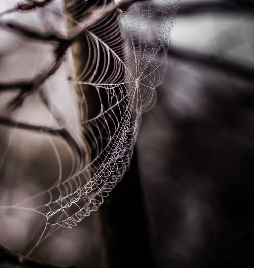 Close-up No People Full Frame Spider Web Outdoors Nature Dew Billowing Nature Photography