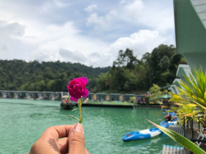 Water Real People Holding Plant Nature Human Hand Hand Human Body Part Flowering Plant Leisure Activity Flower One Person Day Focus On Foreground Beauty In Nature Lifestyles Vulnerability  Freshness Unrecognizable Person Pink Color Finger Outdoors Body Part Flower Head