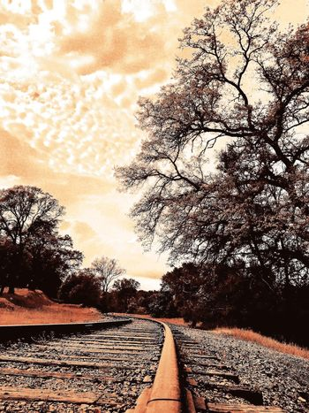 Sky And Clouds Clouds And Sky Train Tracks Travel Traveling Tracks Train Popular Photos Trees OpenEdit