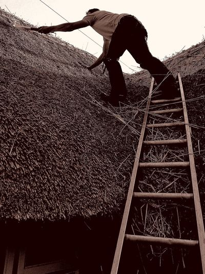 Outdoors Day Work Roof Roofthatcher Straw Thatcher Ladders Strawpeople Thatch Photography Taking Photos HuaweiP9 DualCamera People And Places