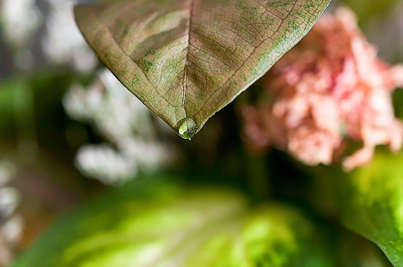 Centered Leaf