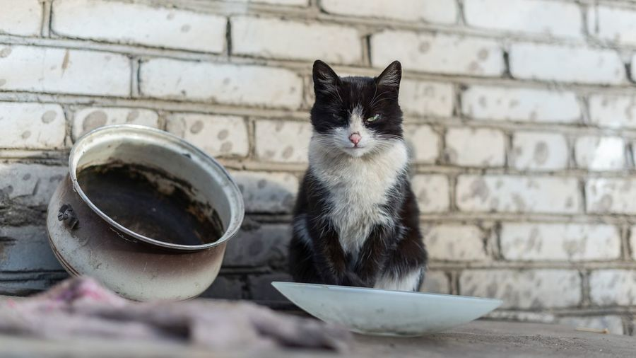 Cat Domestic Animals Domestic Cat Domestic Pets Animal Themes Mammal Whisker Close-up Wall - Building Feature Sitting Focus On Foreground Vertebrate Animal Bowl Day Feline One Animal No People Drink