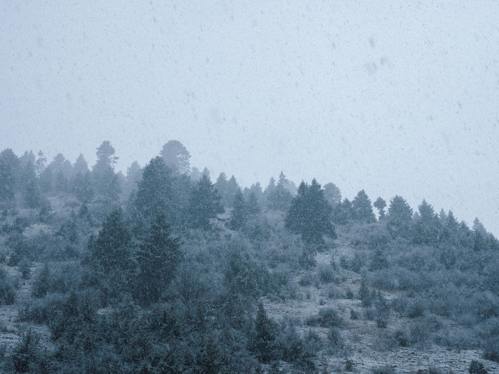Snowing, forest, travel China Landscape No People Nature Beauty In Nature Travel Tree Fog Tranquil Scene Plant Scenics - Nature Tranquility Winter Cold Temperature Sky Forest Land Day Environment Coniferous Tree Snow Snowing Outdoors Hazy