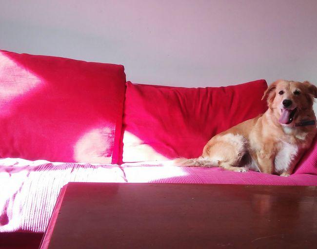 Pink Red Mydog♡ STELLINA♥ Sunny☀ LinguaMatta Linguaccia