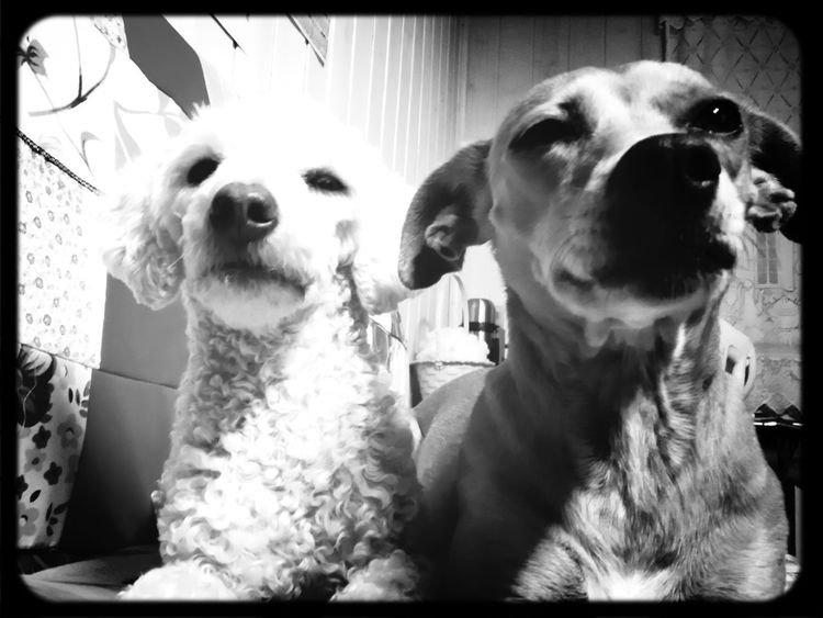 Playing With The Animals Selfiedog Cellphone Photography Bnw_friday_eyeemchallenge