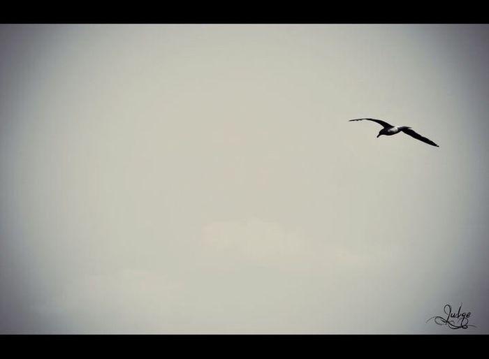 Birds Leylek