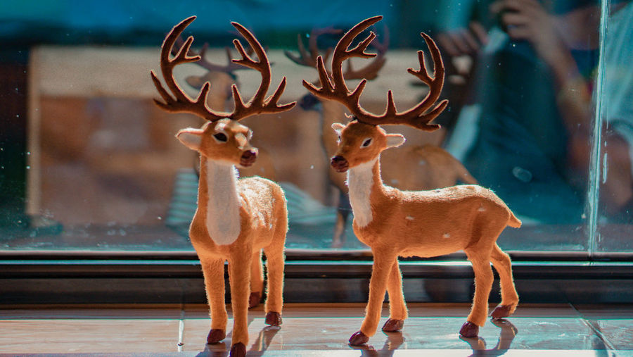 Deer standing by window