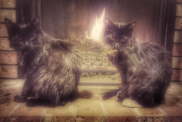 The kittens were given a bath this afternoon. After they sat by the fireplace to dry off. Smart kitties :) KimberlyJTilley