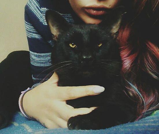 He is Salem!. Cat Lovecats Animals Black BLackCat Selfiecat 🐱 Cheese! Taking Photos Hi! Cute♡ Amore Lovely My Girl Friends Hello World
