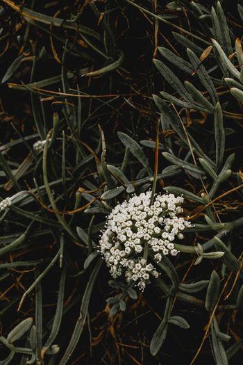 doğa# Flower