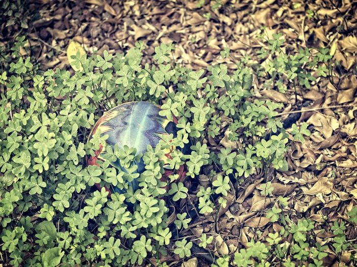 Dry Leaves Lost Ball Beauty In Nature Close-up Day Dry Leaves On The Groundl Fragility Fresh And Dry Green Color Growth Hidden Nature No People Outdoors Plant
