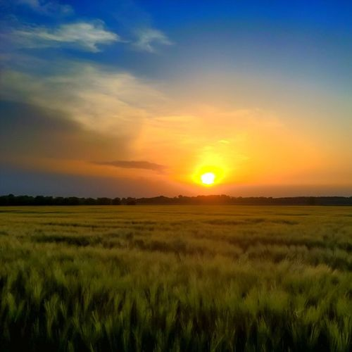 Wheatfields in the sunset, before the storm,near Kalocsa. Sunset Sunset_madness Sunsetlovers Sunsetporn Ig_sunset Viewmysunset Cloudporn Cloud_skye Sun Lumia Lumiaphotography Lumians Lumia930 Mik