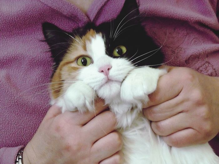 Human Hand Pets Domestic Cat Feline Portrait Bonding Young Animal Close-up