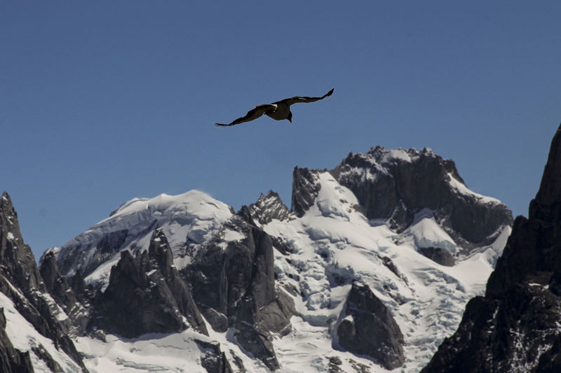 Bird flying over mountains against clear sky