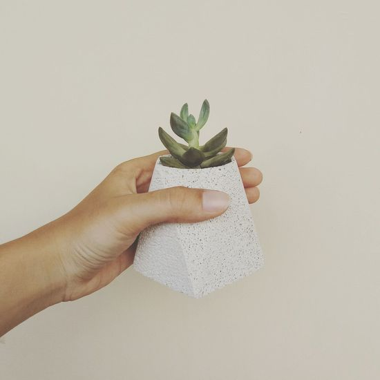 Cropped Image Of Hand Holding Potted Plant Against Wall