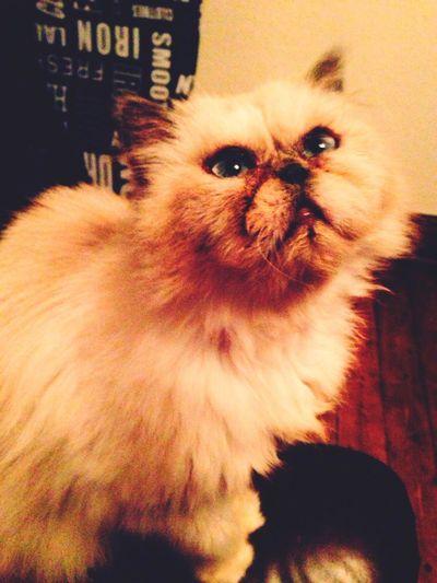 this is Princess. Catsnap