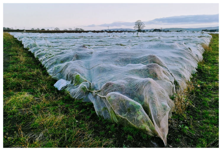Nature Outdoors No People Day Plant Close-up Sunlight And Shadow Crops Kirriemuir Countryside Farmland Covering Protection Netting