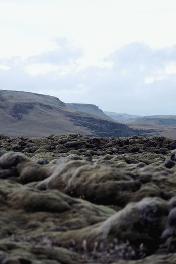 Didn't know a field of mossy volcanic rocks could be so beautiful. IG @noeldxng Iceland Moss Mossy Mountain Volcanic Landscape Lava Rock - Object Sky Landscape Cloud - Sky Volcanic Rock Volcanic Activity Geology Arid Landscape Physical Geography Rugged Rock Formation Dramatic Landscape The Great Outdoors - 2018 EyeEm Awards