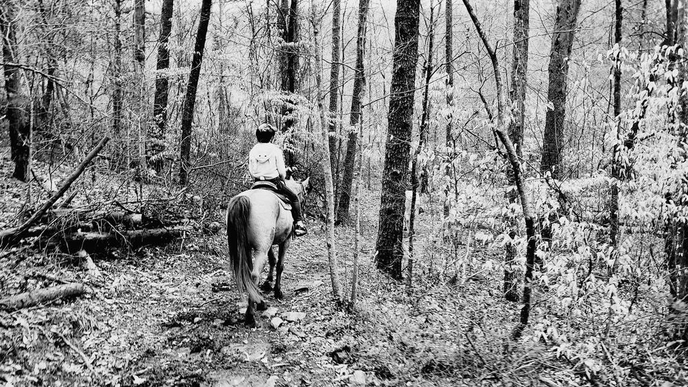 quiet ride through the woods Love Forest Trees And Nature Horses Trailride GiddyUp Clearskys Blackandwhite Family Low Section Pets Animal Markings Ground Animal Track Woods The Great Outdoors - 2018 EyeEm Awards EyeEmNewHere
