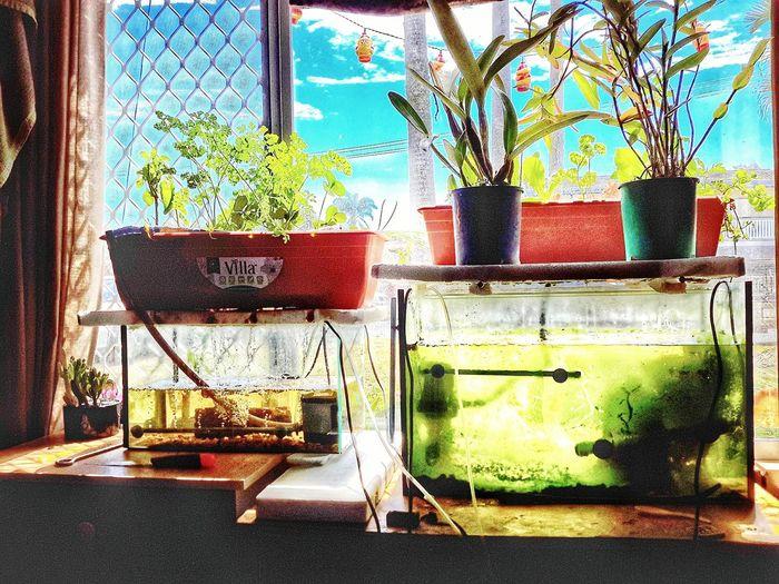 Aquaponics Freshness Growth Potted Plant Growing Aquarium