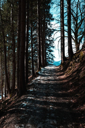 Path into nowhere Tree Forest The Way Forward Nature Footpath Outdoors Path Way Mountains Winter Spring Woods Trees Leading Leading Lines Moody Vintage Retro Road Bavaria Alps Alpen Bayern Germany