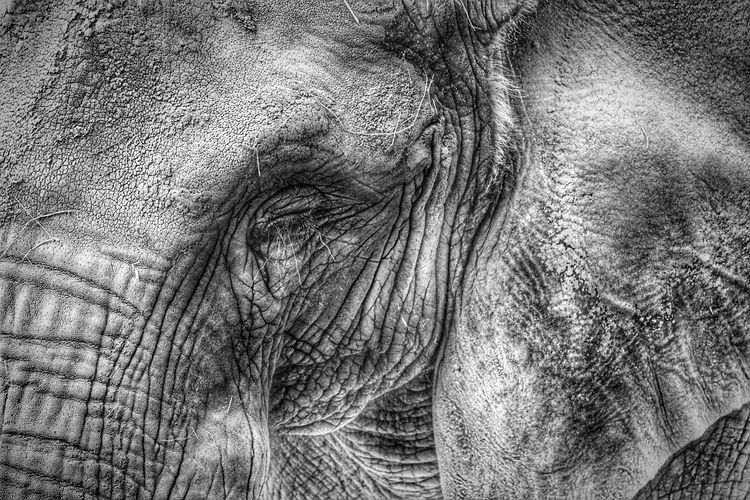 Elefant Blackandwhite Black And White Collection  Streamzoofamily B&w Loveanimals Face EyeEm Best Shots EyeEm Nature Lover Bnk