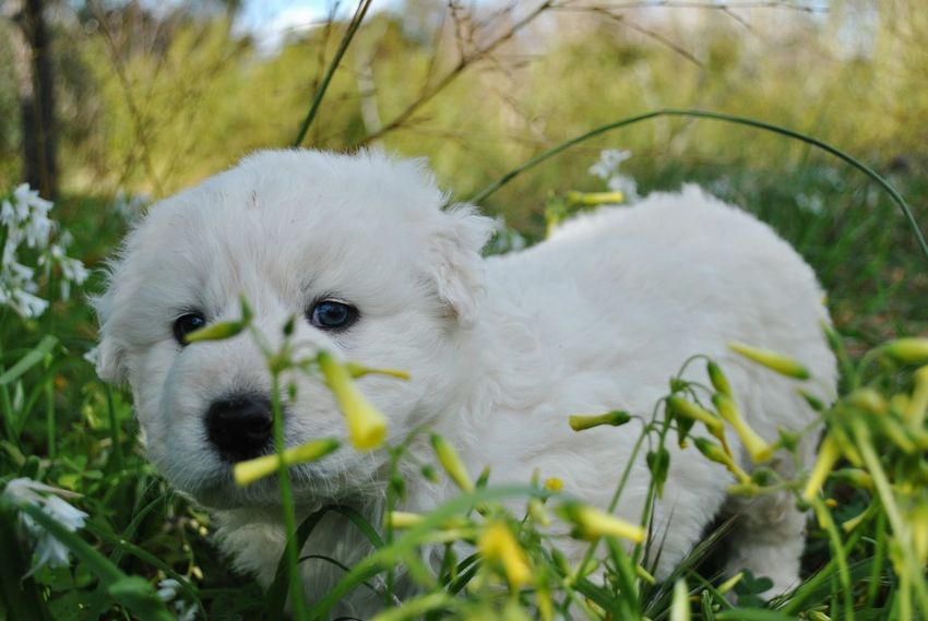 Pets Animal One Animal Cute Looking At Camera Portrait Nose Ear Mammal Grass Young Animal No People Eating Domestic Animals Outdoors Closing Day Nature Close-up Animal Themes Pet Portraits Puppy Green Plant Dog Litle Dog