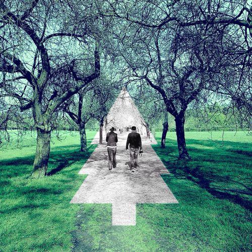 Trees IPhone Art